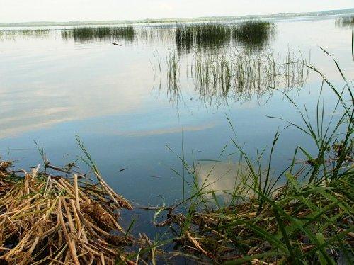 рыбалка в ярославской области ростовский район