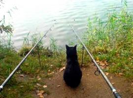 Анекдоты и карикатуры про рыбалку