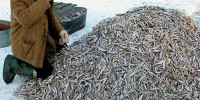 Типы рыболовов-любителей: классификация портала OZERA.info