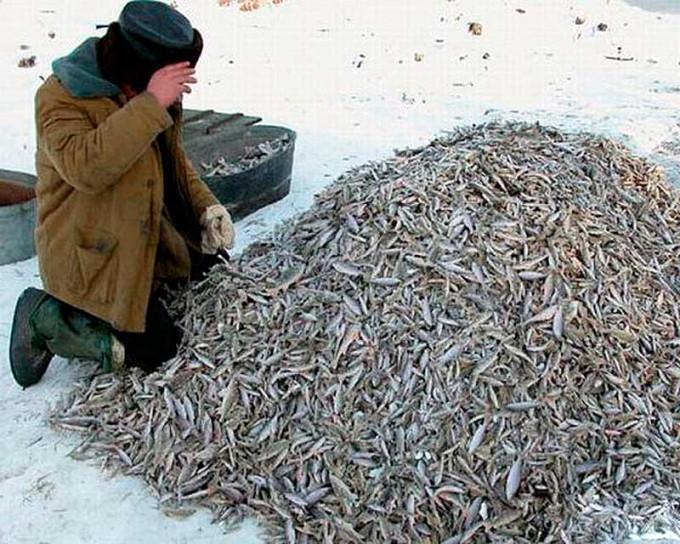 И куда эту рыбу девать-то? Эх!!!