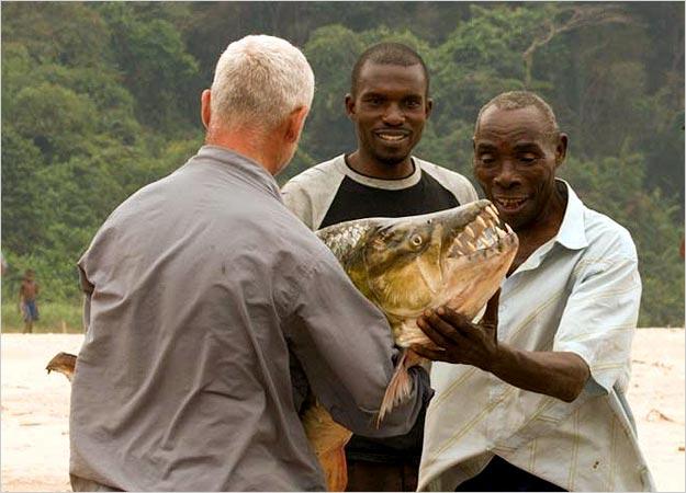 Африканская тигровая рыба на лету глотает птиц