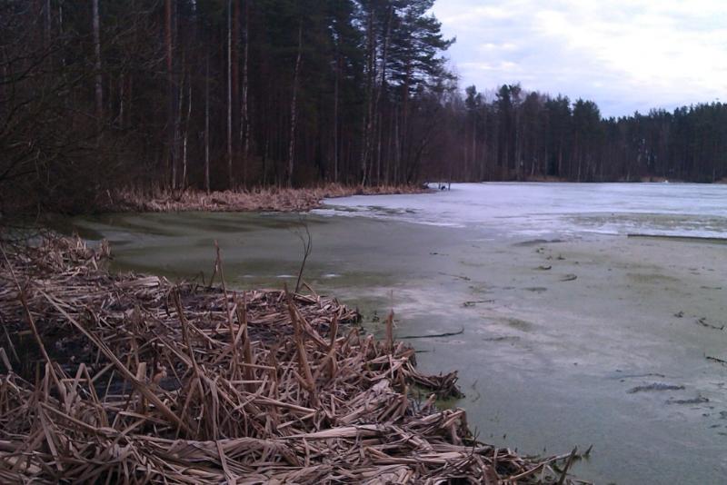 Из озера  Илистое канализационные стоки прибило к горнолыжному курорту «Пухтолова гора»