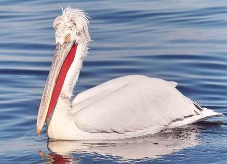 На Дону поселились редкие виды птиц, занесенных в Красную Книгу России