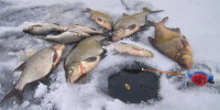Рыбалка по первому льду