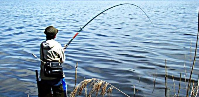 Выводка крупной рыбы