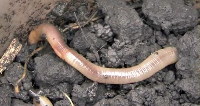 Искусственный червяк