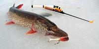 Календарь оптимального использования рыболовных снастей для подледного лова рыбы